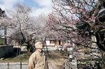 梅や桜の開花状況を確認する八木さん=黒部市三日市の西徳寺