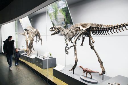リニューアルされた福井県立恐竜博物館の恐竜化石の展示=27日午前、福井県勝山市